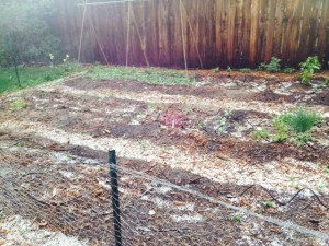 Hail in my garden.